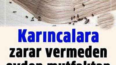 Karıncalara Zarar Vermeden Uzaklaştırmanın Hiç Duymadığınız 5 Doğal Yolu
